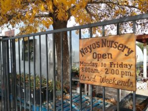 Nayo's Nursery and our greenhouse is open Monday to Friday from 8am to 2pm. We're closed weekends.